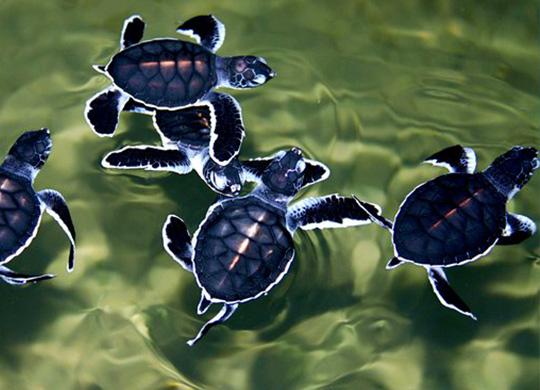 Turtle-Hatchery